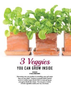 3 Veggies You Can Grow Inside HGD0814