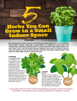 5 Herbs You Can Grow In A Small Indoor Space HGD1414
