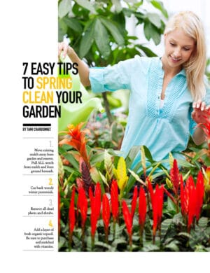 7 Easy Tips To Spring Clean Your Garden HGD0306