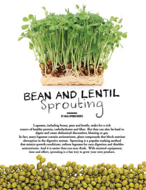 Bean And Lentil Sprouting HGD0914