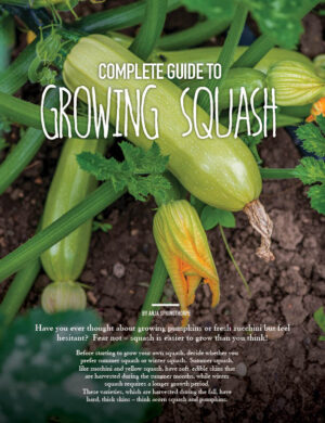 Complete Guide To Growing Squash HGD0706