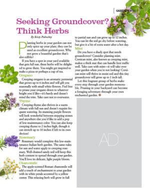 Seeking Groundcover? Think Herbs AL1305